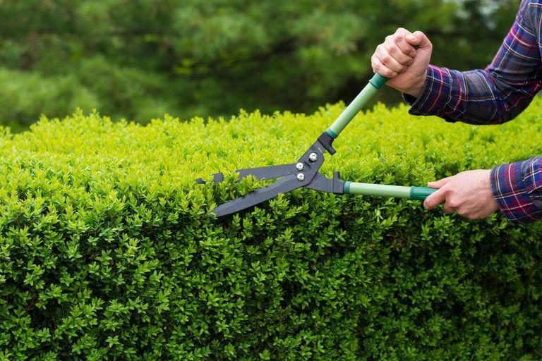 Siepi Da Giardino Prezzi : Quanto costa la potatura siepi guida ai prezzi instapro